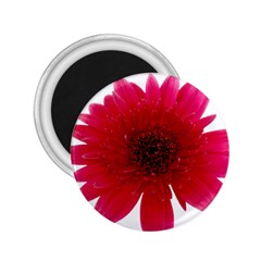 Flower Isolated Transparent Blossom 2 25  Magnets by Nexatart