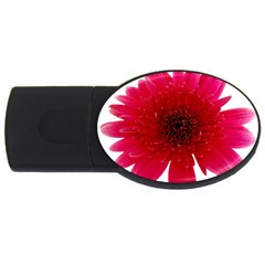 Flower Isolated Transparent Blossom Usb Flash Drive Oval (2 Gb) by Nexatart