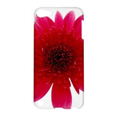 Flower Isolated Transparent Blossom Apple Ipod Touch 5 Hardshell Case