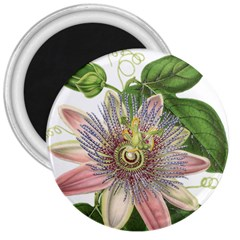 Passion Flower Flower Plant Blossom 3  Magnets by Nexatart