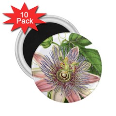 Passion Flower Flower Plant Blossom 2 25  Magnets (10 Pack)  by Nexatart