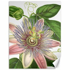 Passion Flower Flower Plant Blossom Canvas 18  X 24   by Nexatart