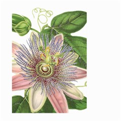 Passion Flower Flower Plant Blossom Large Garden Flag (two Sides) by Nexatart