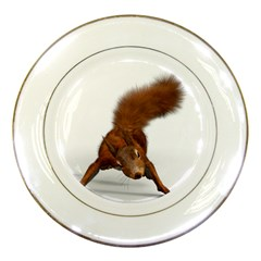 Squirrel Wild Animal Animal World Porcelain Plates by Nexatart