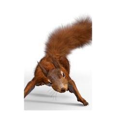 Squirrel Wild Animal Animal World Shower Curtain 48  X 72  (small)  by Nexatart