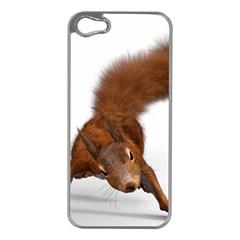 Squirrel Wild Animal Animal World Apple Iphone 5 Case (silver) by Nexatart