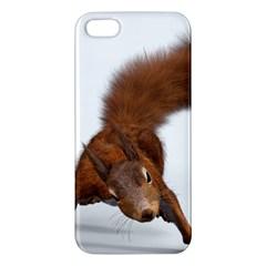 Squirrel Wild Animal Animal World Apple Iphone 5 Premium Hardshell Case by Nexatart