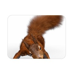 Squirrel Wild Animal Animal World Double Sided Flano Blanket (mini)  by Nexatart
