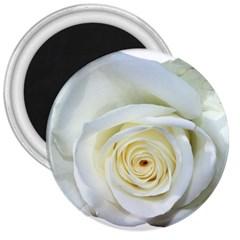 Flower White Rose Lying 3  Magnets by Nexatart
