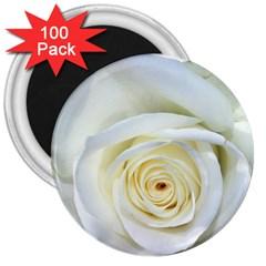 Flower White Rose Lying 3  Magnets (100 Pack) by Nexatart