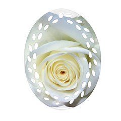 Flower White Rose Lying Oval Filigree Ornament (two Sides) by Nexatart