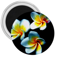 Flowers Black White Bunch Floral 3  Magnets by Nexatart