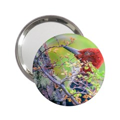 Woodpecker At Forest Pecking Tree, Patagonia, Argentina 2 25  Handbag Mirrors by dflcprints