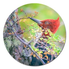 Woodpecker At Forest Pecking Tree, Patagonia, Argentina Magnet 5  (round) by dflcprints