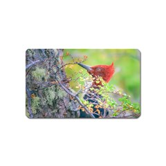 Woodpecker At Forest Pecking Tree, Patagonia, Argentina Magnet (name Card) by dflcprints
