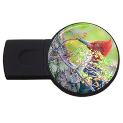 Woodpecker At Forest Pecking Tree, Patagonia, Argentina Usb Flash Drive Round (2 Gb) by dflcprints