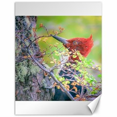 Woodpecker At Forest Pecking Tree, Patagonia, Argentina Canvas 12  X 16   by dflcprints