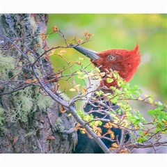 Woodpecker At Forest Pecking Tree, Patagonia, Argentina Canvas 20  X 24   by dflcprints