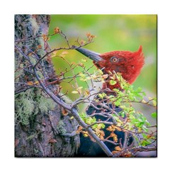 Woodpecker At Forest Pecking Tree, Patagonia, Argentina Face Towel