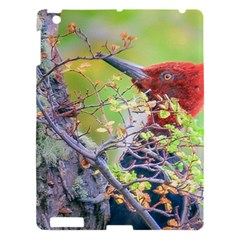 Woodpecker At Forest Pecking Tree, Patagonia, Argentina Apple Ipad 3/4 Hardshell Case by dflcprints