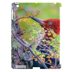 Woodpecker At Forest Pecking Tree, Patagonia, Argentina Apple Ipad 3/4 Hardshell Case (compatible With Smart Cover) by dflcprints