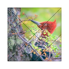 Woodpecker At Forest Pecking Tree, Patagonia, Argentina Acrylic Tangram Puzzle (6  X 6 ) by dflcprints