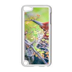 Woodpecker At Forest Pecking Tree, Patagonia, Argentina Apple Ipod Touch 5 Case (white) by dflcprints