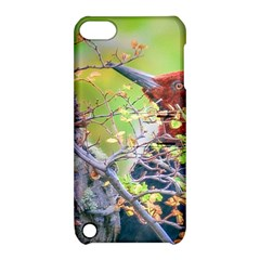 Woodpecker At Forest Pecking Tree, Patagonia, Argentina Apple Ipod Touch 5 Hardshell Case With Stand by dflcprints