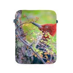 Woodpecker At Forest Pecking Tree, Patagonia, Argentina Apple Ipad 2/3/4 Protective Soft Cases by dflcprints