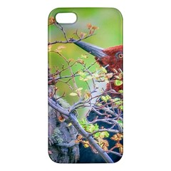 Woodpecker At Forest Pecking Tree, Patagonia, Argentina Iphone 5s/ Se Premium Hardshell Case by dflcprints