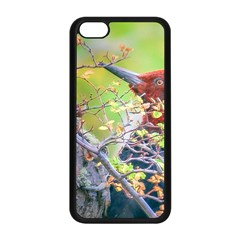 Woodpecker At Forest Pecking Tree, Patagonia, Argentina Apple Iphone 5c Seamless Case (black) by dflcprints