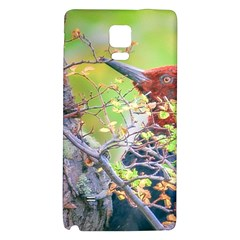Woodpecker At Forest Pecking Tree, Patagonia, Argentina Galaxy Note 4 Back Case by dflcprints