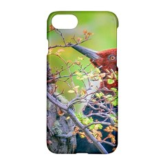 Woodpecker At Forest Pecking Tree, Patagonia, Argentina Apple Iphone 7 Hardshell Case by dflcprints