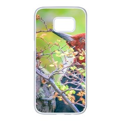 Woodpecker At Forest Pecking Tree, Patagonia, Argentina Samsung Galaxy S7 Edge White Seamless Case by dflcprints