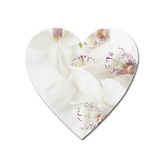 Orchids Flowers White Background Heart Magnet by Nexatart