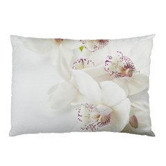 Orchids Flowers White Background Pillow Case (two Sides) by Nexatart