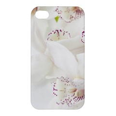 Orchids Flowers White Background Apple Iphone 4/4s Hardshell Case by Nexatart