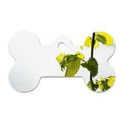 Leaves Nature Dog Tag Bone (one Side) by Nexatart