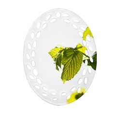 Leaves Nature Oval Filigree Ornament (two Sides) by Nexatart