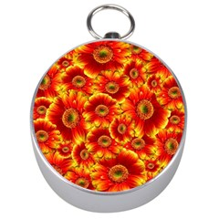 Gerbera Flowers Nature Plant Silver Compasses by Nexatart
