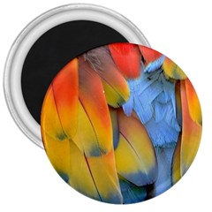 Spring Parrot Parrot Feathers Ara 3  Magnets by Nexatart