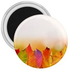Autumn Leaves Colorful Fall Foliage 3  Magnets by Nexatart