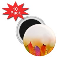 Autumn Leaves Colorful Fall Foliage 1 75  Magnets (10 Pack)  by Nexatart