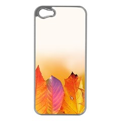 Autumn Leaves Colorful Fall Foliage Apple Iphone 5 Case (silver) by Nexatart