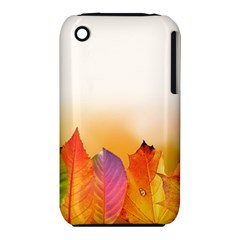 Autumn Leaves Colorful Fall Foliage Iphone 3s/3gs by Nexatart