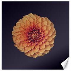 Art Beautiful Bloom Blossom Bright Canvas 20  X 20   by Nexatart