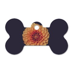 Art Beautiful Bloom Blossom Bright Dog Tag Bone (two Sides) by Nexatart