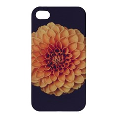 Art Beautiful Bloom Blossom Bright Apple Iphone 4/4s Premium Hardshell Case by Nexatart