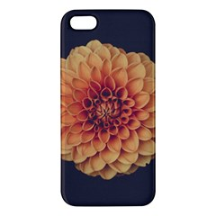 Art Beautiful Bloom Blossom Bright Iphone 5s/ Se Premium Hardshell Case by Nexatart