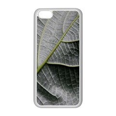 Leaf Detail Macro Of A Leaf Apple Iphone 5c Seamless Case (white) by Nexatart